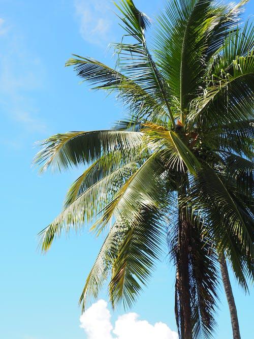 Kostnadsfri bild av avslappnat, blå, blå himmel, grön