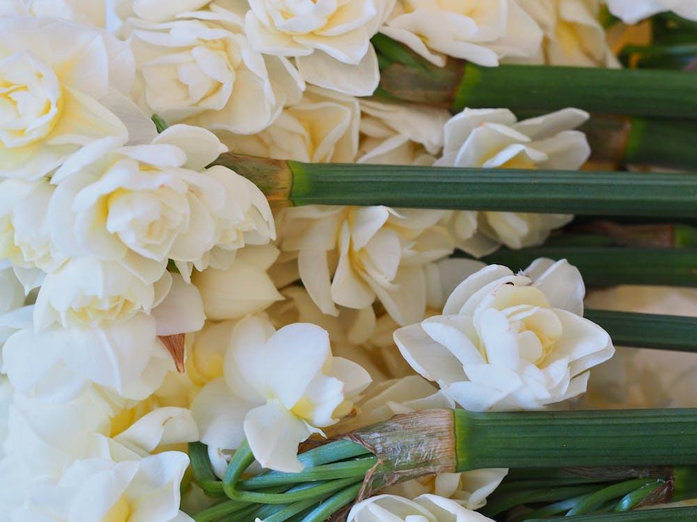blanc, bonic, flor