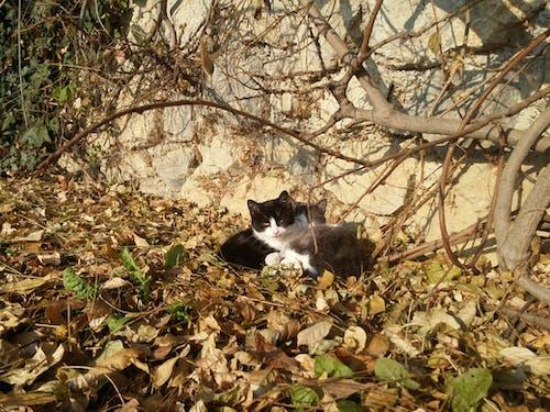 Immagine gratuita di amore, coccola, gattini