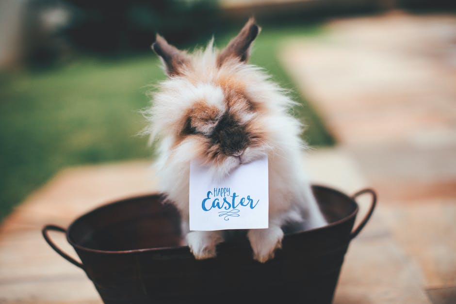 Hare on basket with happy easter card on mouth
