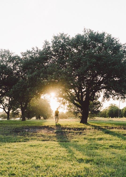 arbres, brillant, caminant