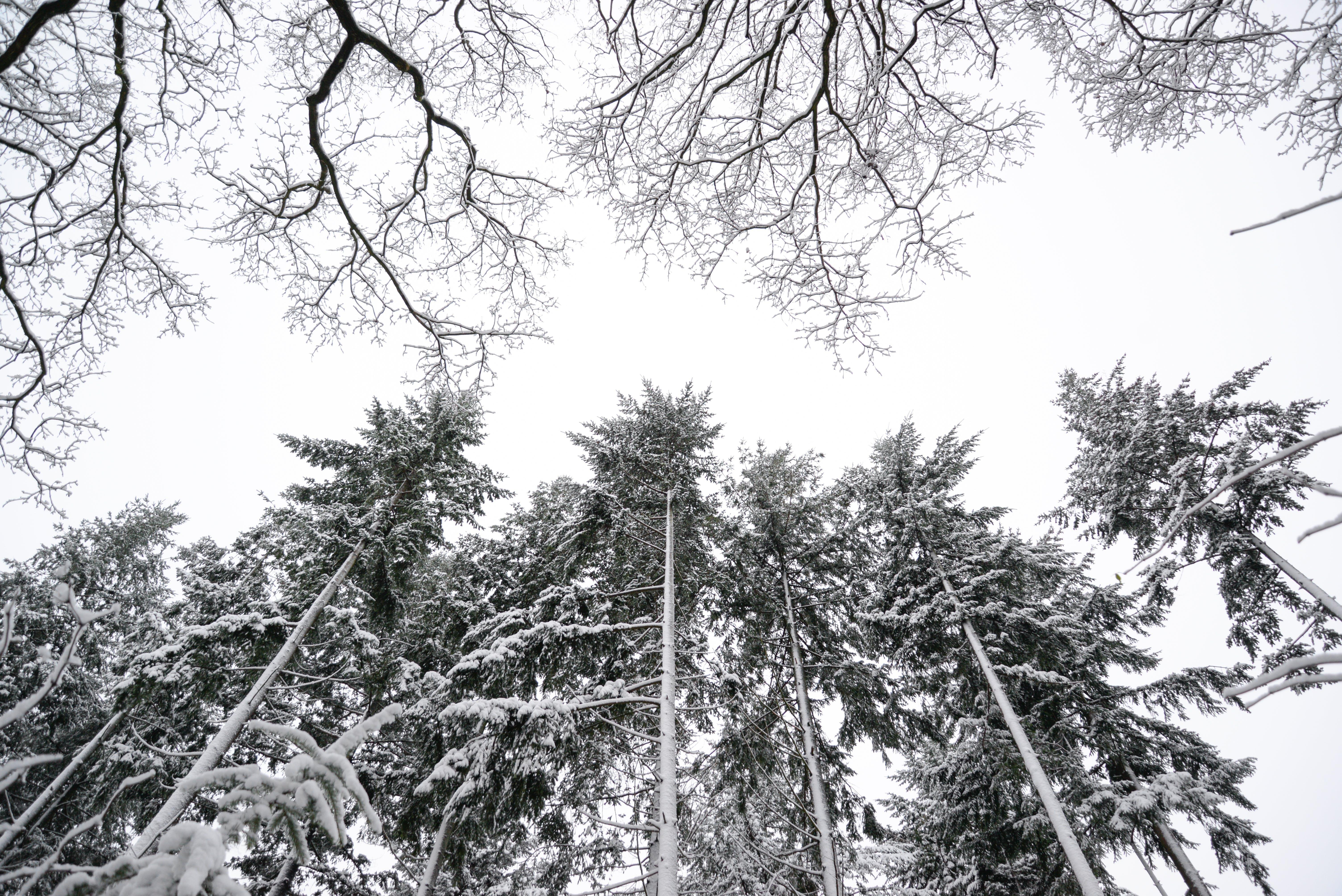 Immagine gratuita di alberi, ambiente, bianco, boschi