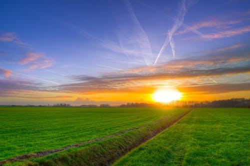 Foto d'estoc gratuïta de a l'aire lliure, a pagès, agricultura, alba