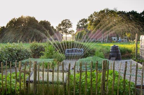 Foto d'estoc gratuïta de aigua, arbres, aspersor, banc