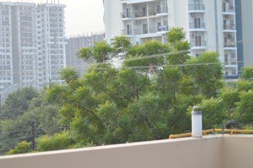 Безкоштовне стокове фото на тему «Будівля, дерева, зелень»