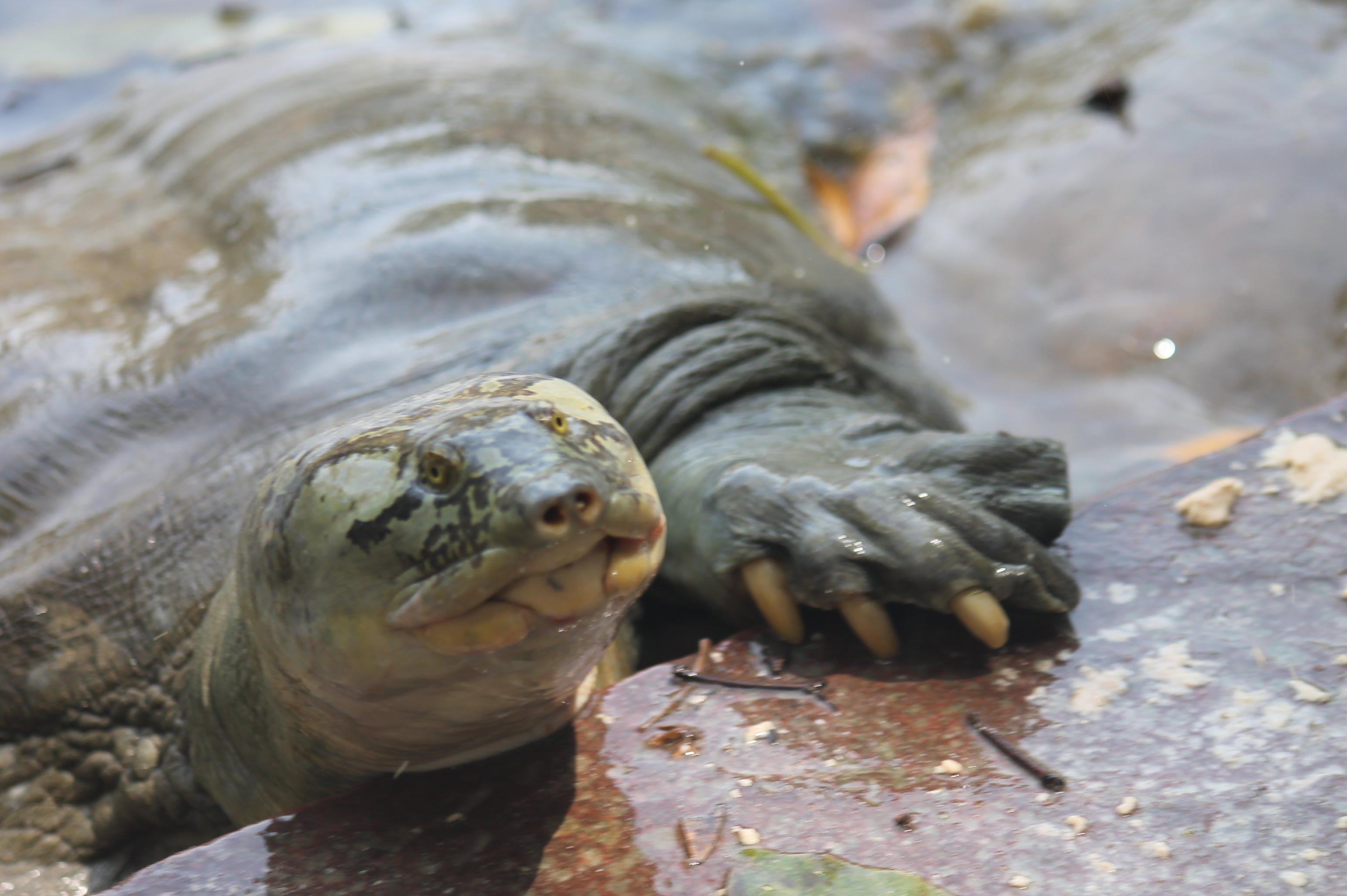 Kostenloses Stock Foto zu schildkröte, tier