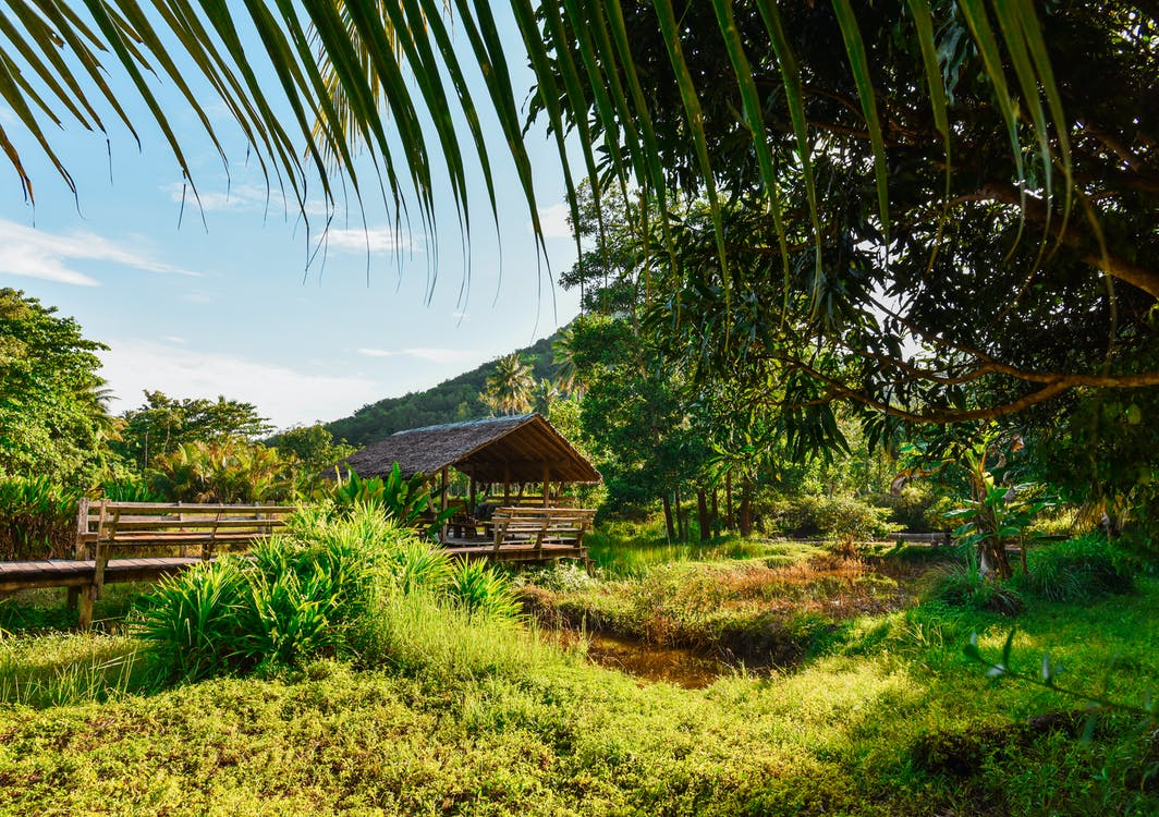 Landscape Photography of Hut Surrounded by Trees