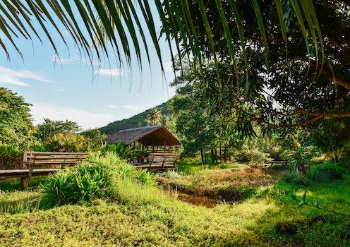 Free stock photo of nature, trees, hut, resort