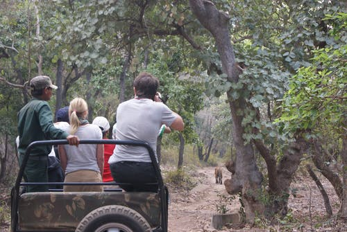 Gratis lagerfoto af jeep safari, jungle safari, ranthambore, tiger safari