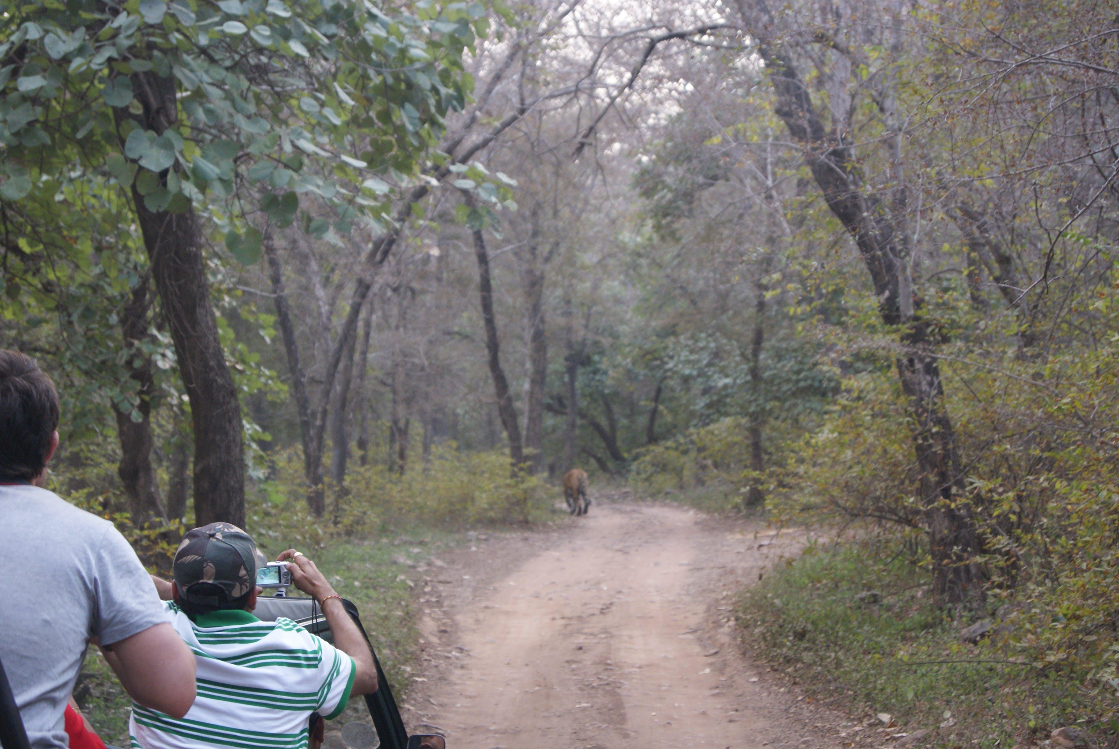 Kostenloses Stock Foto zu dschungel-safari, jeep safari, safari, tiger reserve