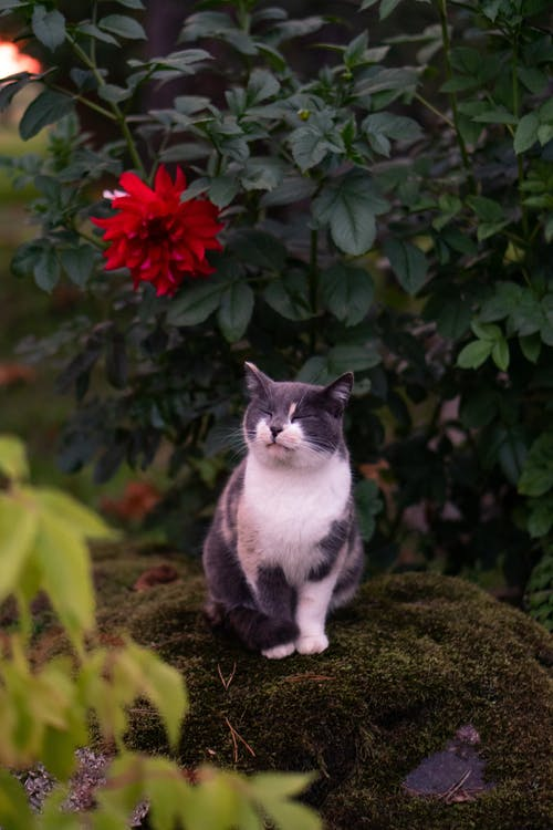 Black and White Cat on Green Grass Field