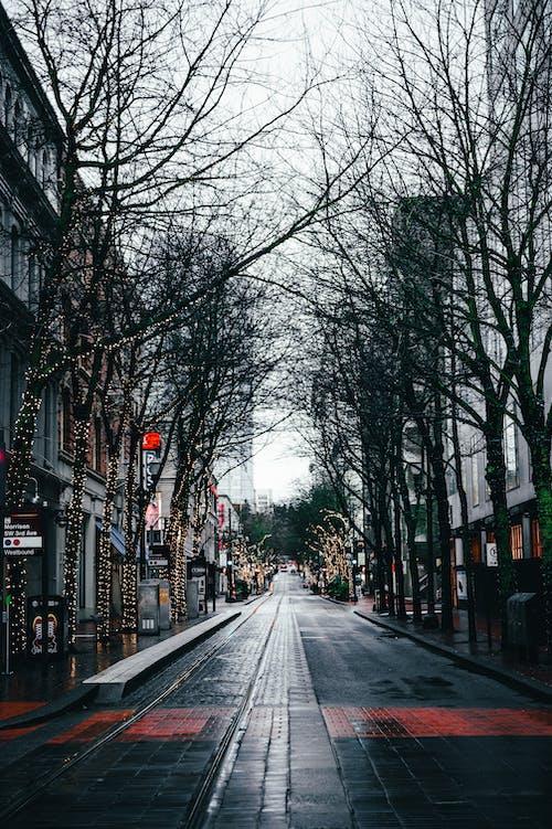 Black Asphalt Road Between Bare Trees