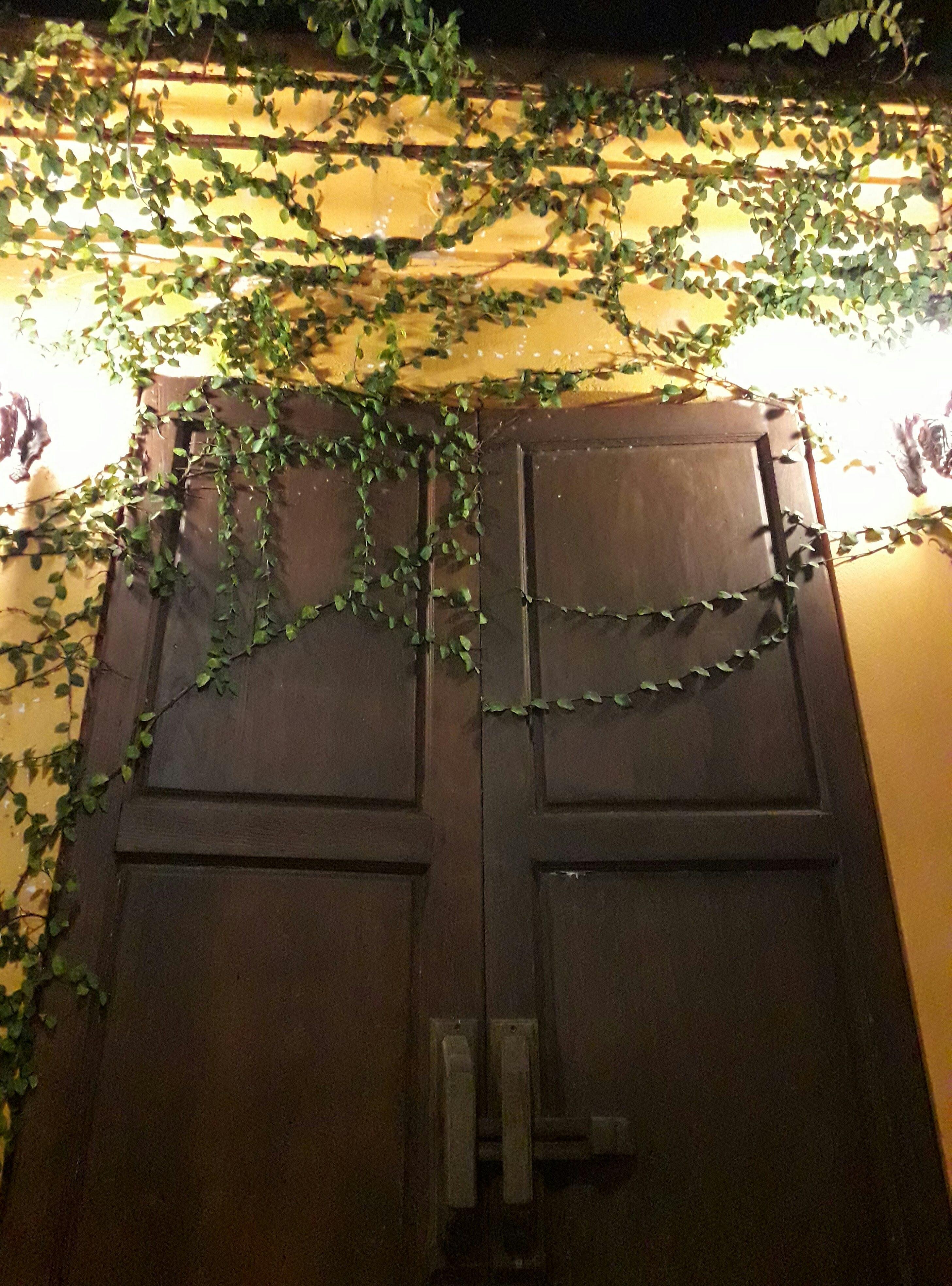 Free stock photo of door, light, plant, yellow