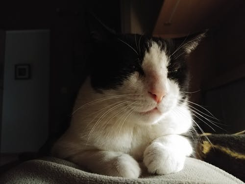 Selective Focus Photography of Short-fur White and Black Cat