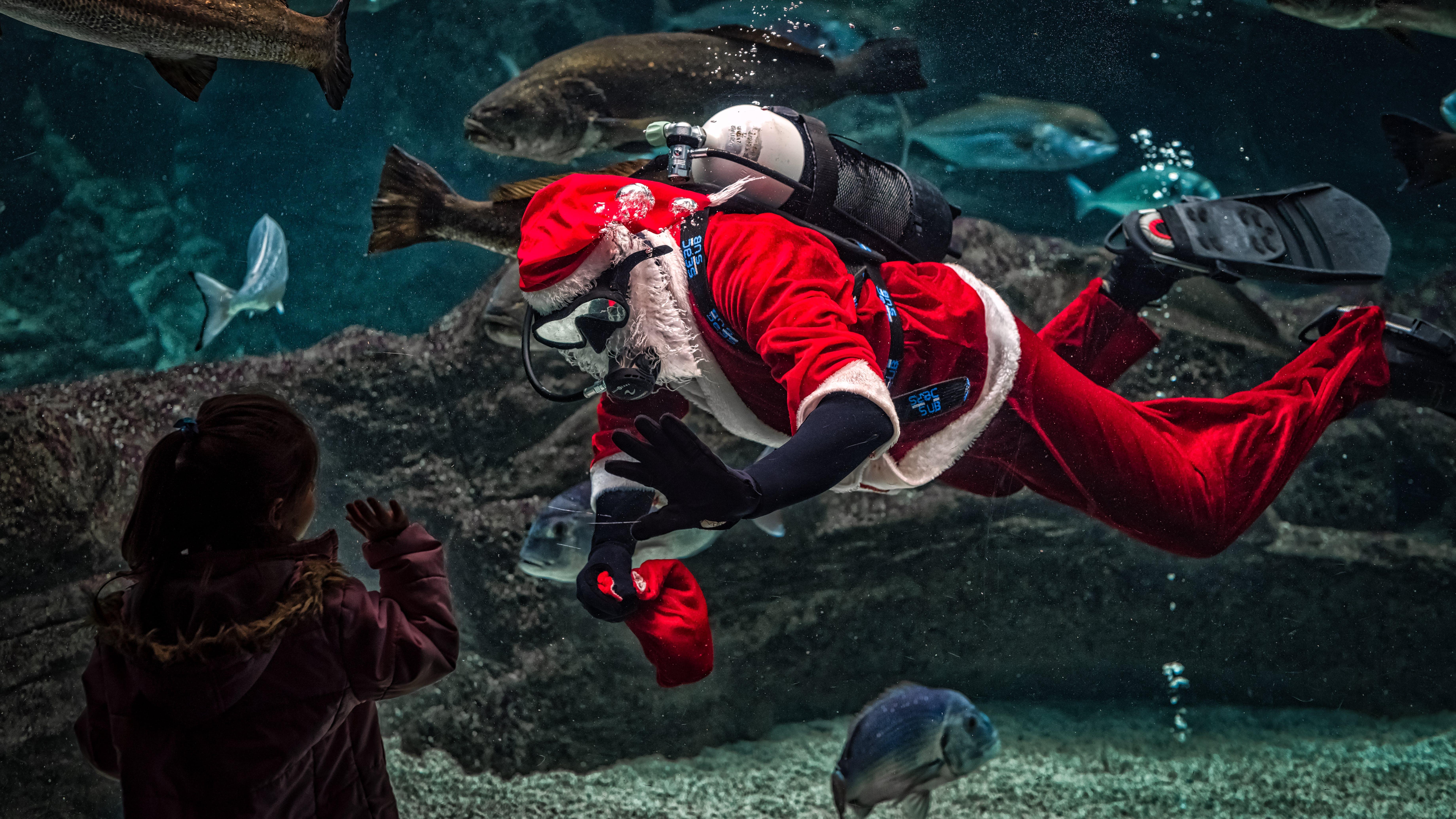 Man in Santa Claus Costume With Diving Gear Inside Aquarium