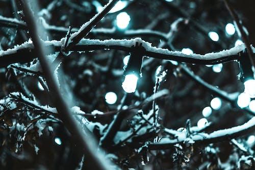 Imagine de stoc gratuită din alb, arbore, aspect, beculețe