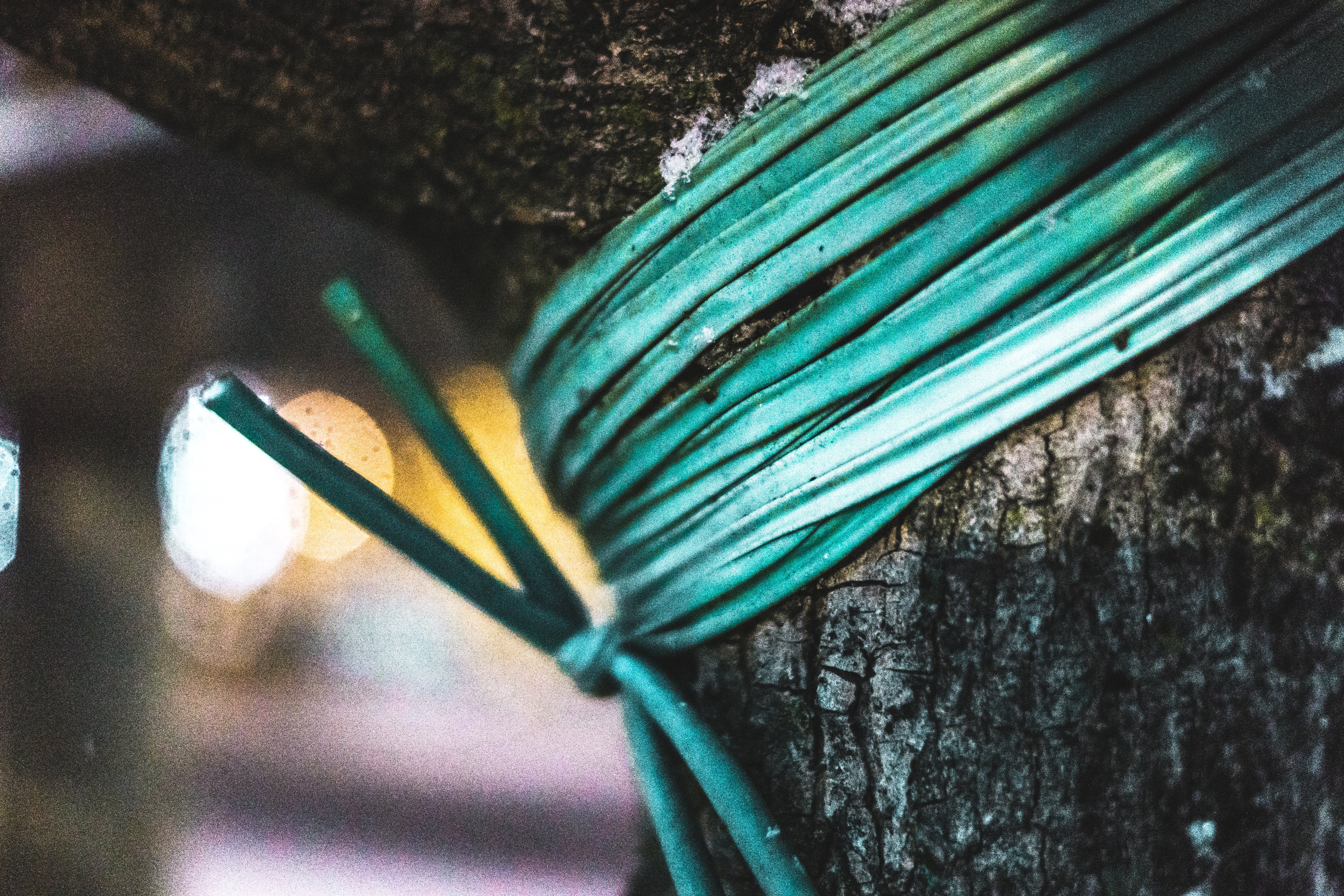 Green Rope Tied on Tree