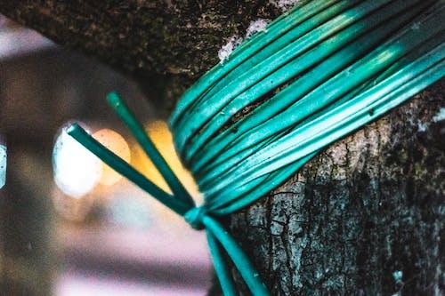 Gratis lagerfoto af bark, blå, close-up, dagslys