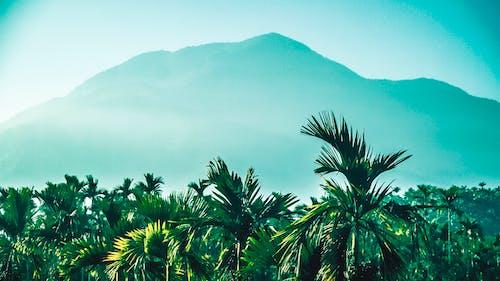Immagine gratuita di azienda agricola, bellissimo, cielo sereno, destinazione