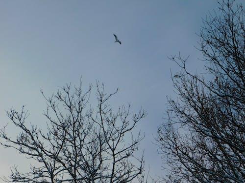 Foto stok gratis langit biru, musim dingin