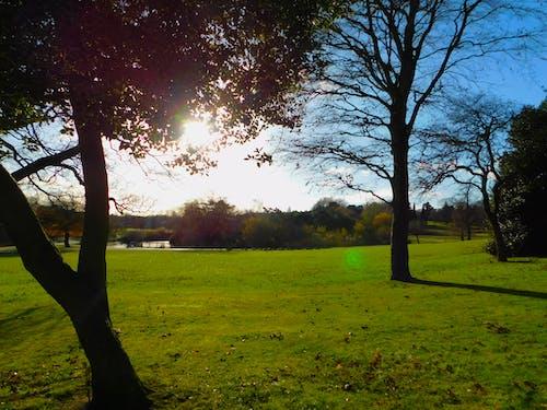 Foto stok gratis kebun, taman, taman alam