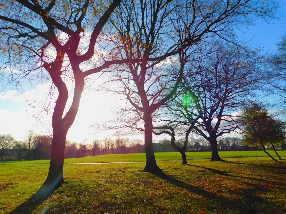 denní světlo, dřevo, jasný