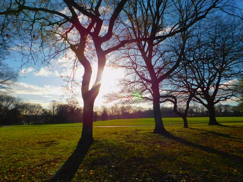 Foto stok gratis taman alam