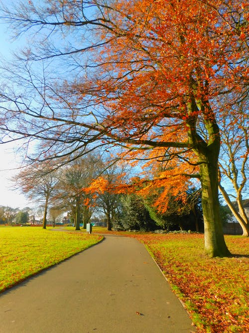 Foto stok gratis daun merah