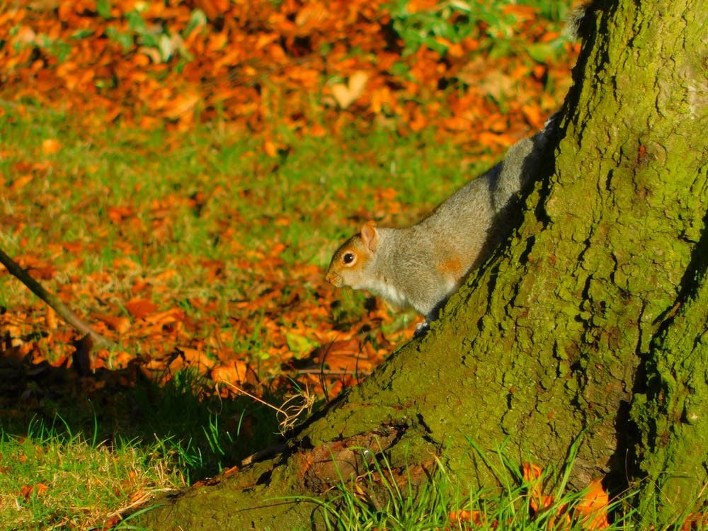 Free stock photo of squirrel