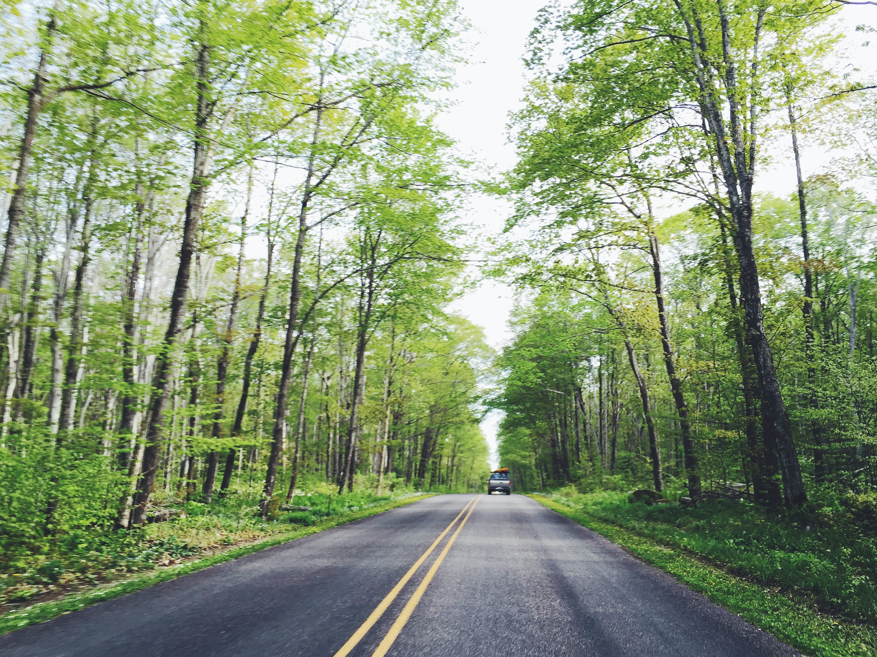 Free stock photo of road, street, forest, straight