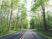 road, street, forest