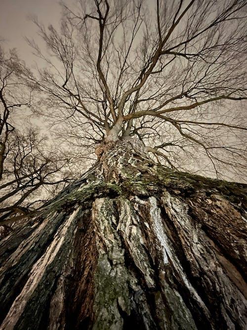 Free stock photo of bark, nature, tree bark