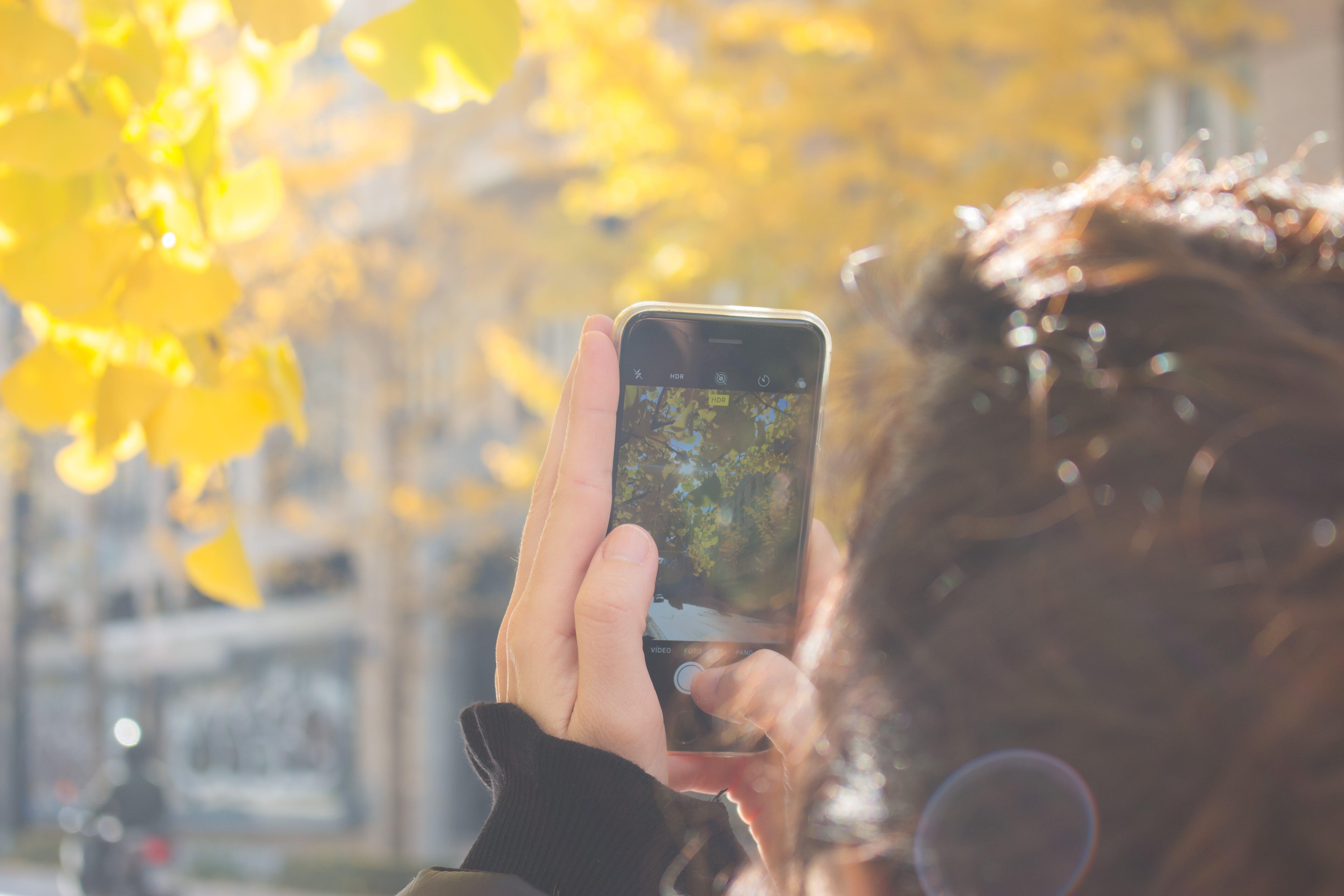 Man Wearing Black Jacket Using Iphone Taking Picture of Green Leaf Tree