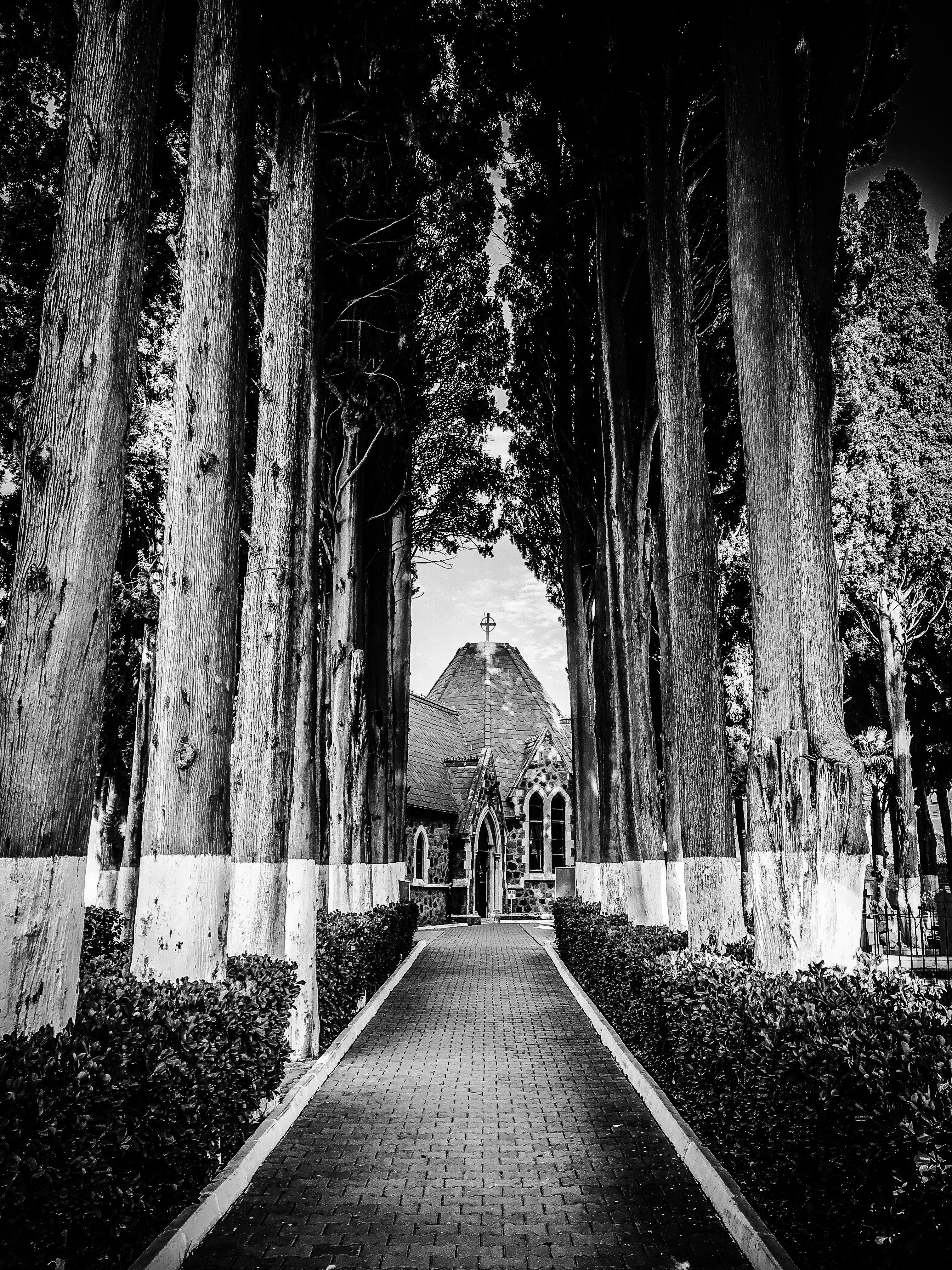 Pathway Through Cathedral Surrounded by Trees in Grayscale Photography