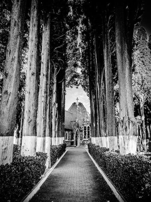 คลังภาพถ่ายฟรี ของ ขาวดำ, ต้นไม้, ถนน, ทางเดิน