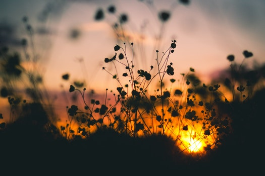 Free stock photo of nature, sunset, flowers, twilight