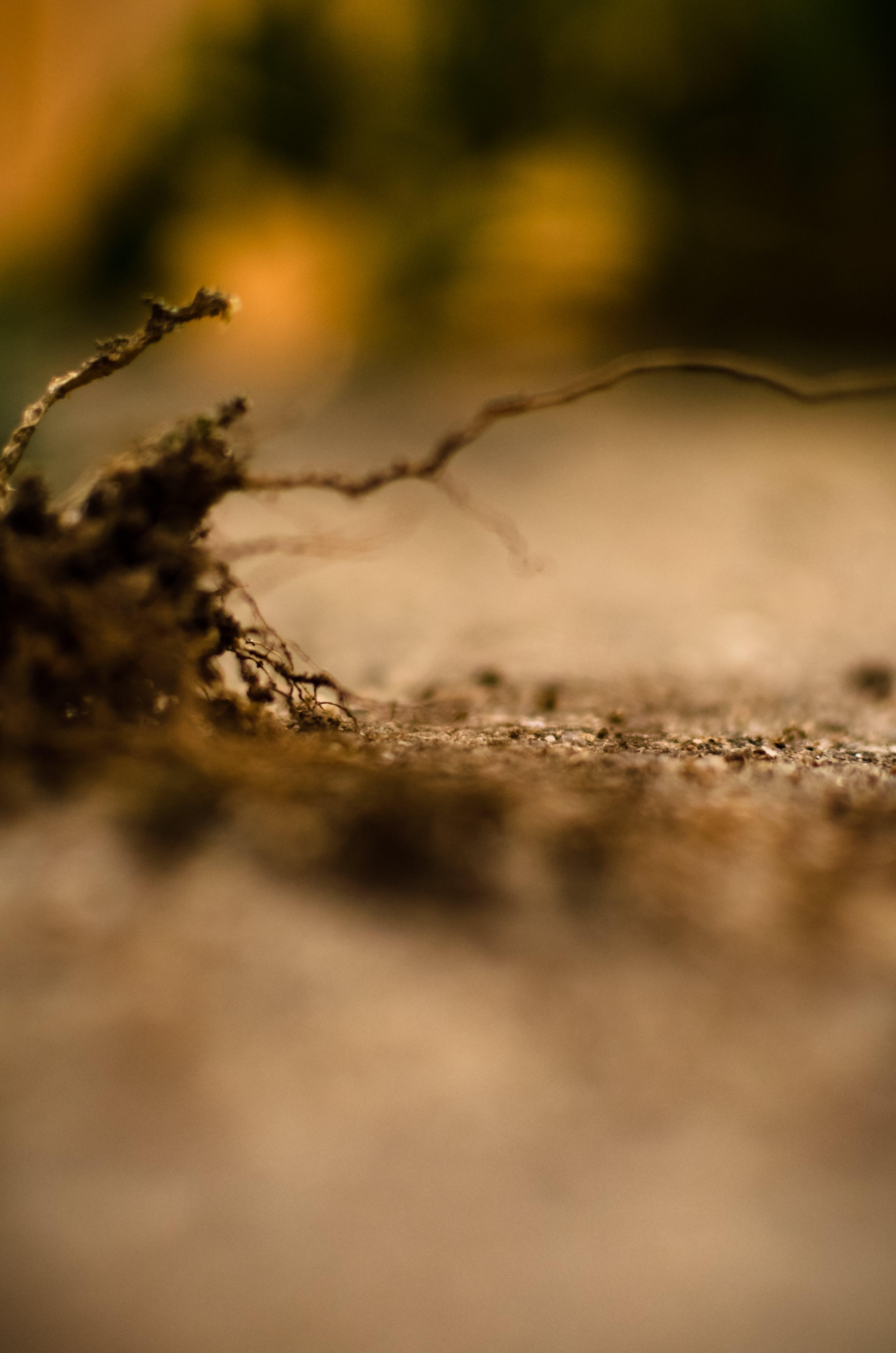 Free stock photo of land, roots, miniature, unfocused