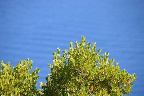 그리스, 녹색, 푸른 바다의 무료 스톡 사진