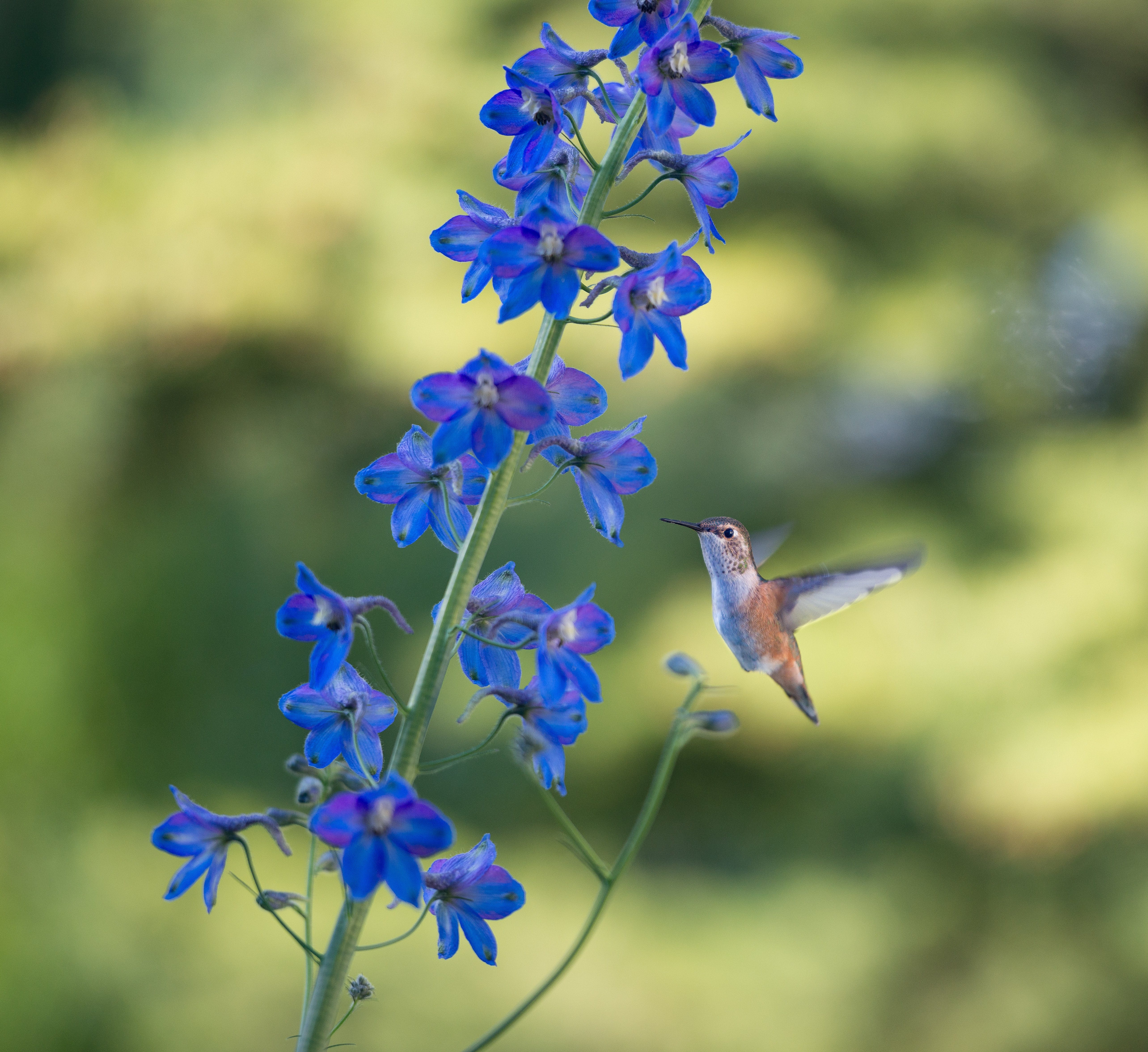 Free stock photo of Summertime Blue