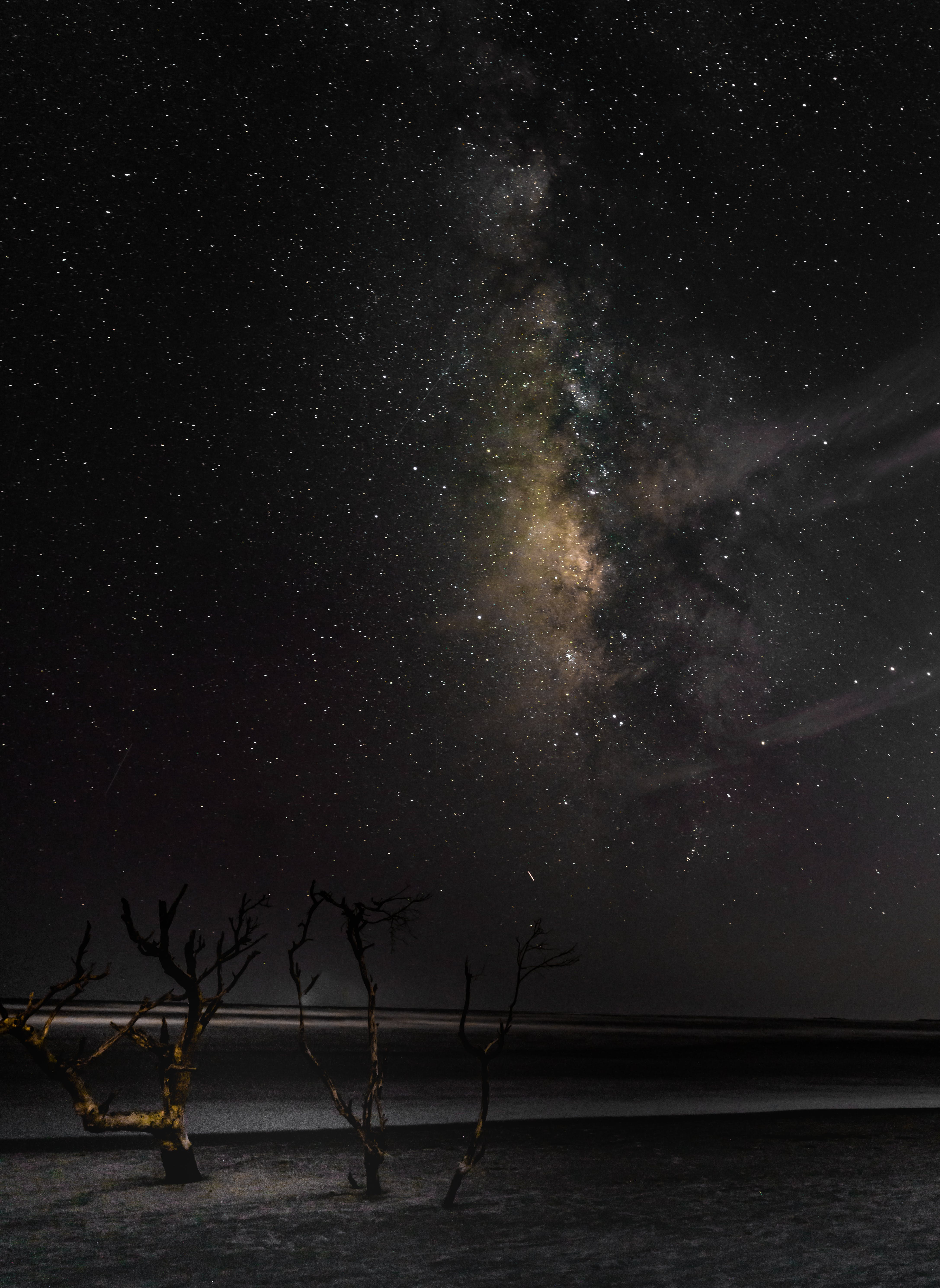 Bare Tree Under Starry Sky