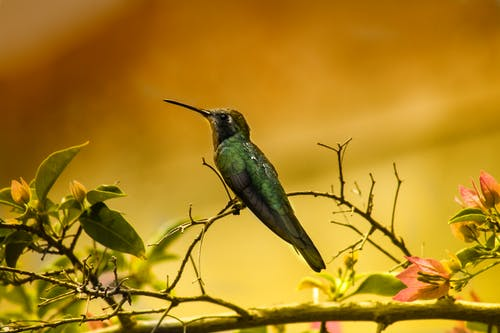 Shallow Focus Photography of Green Humming Bird