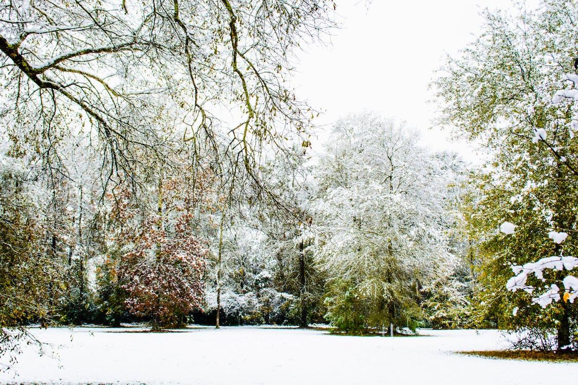 Free stock photo of Louisiana Snow