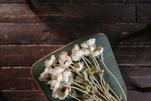 俯視圖, 模糊的背景, 白色的花朵 的 免费素材图片