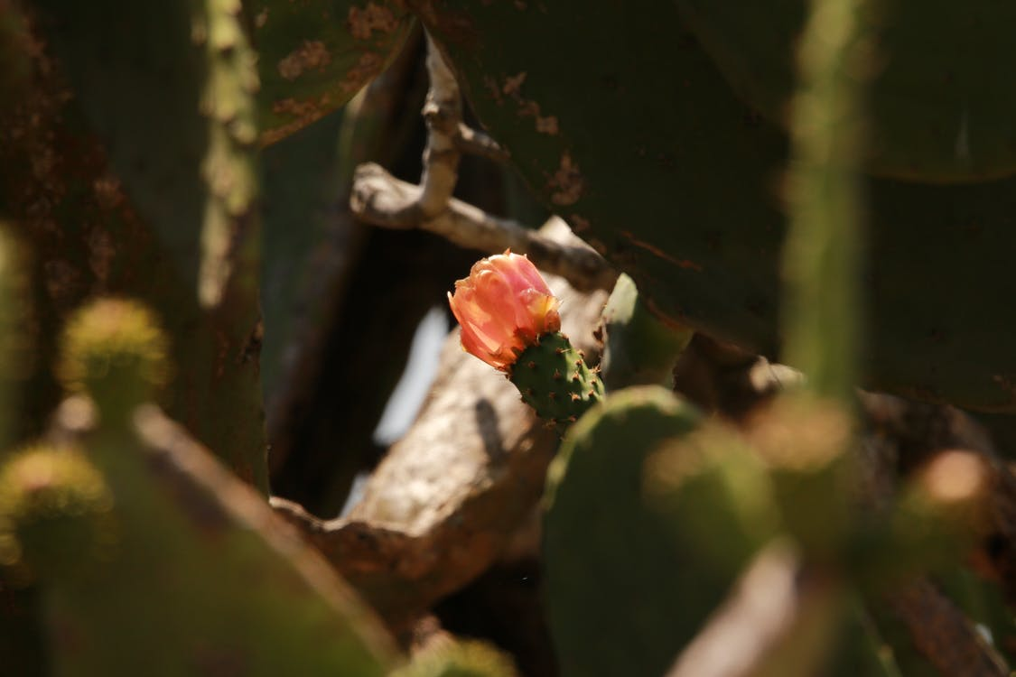 Free stock photo of cactus, cactus plant, prickly