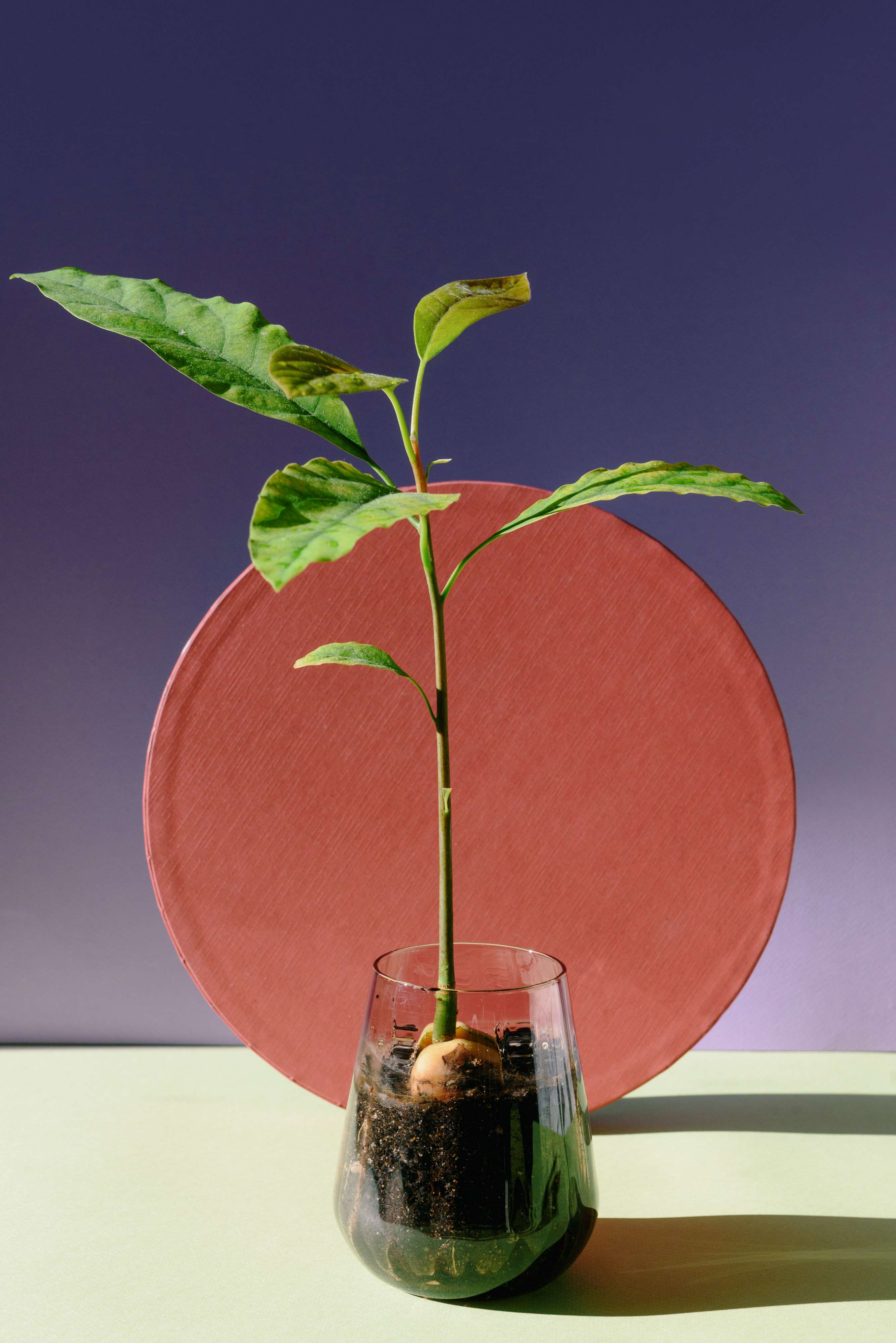 light summer agriculture pot