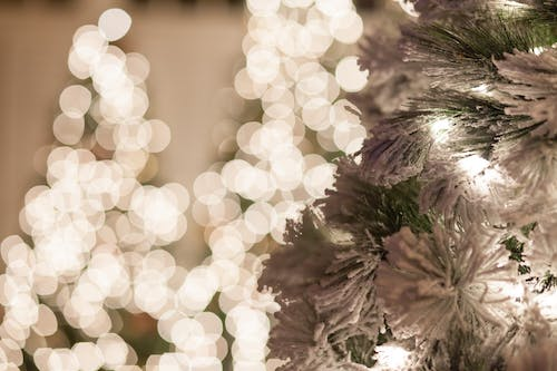 Free stock photo of boken, holiday lights, Snow Covered Tree