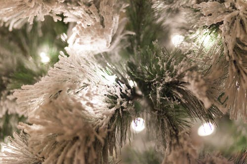 Free stock photo of holiday lights, holiday tree, Snow Covered Tree