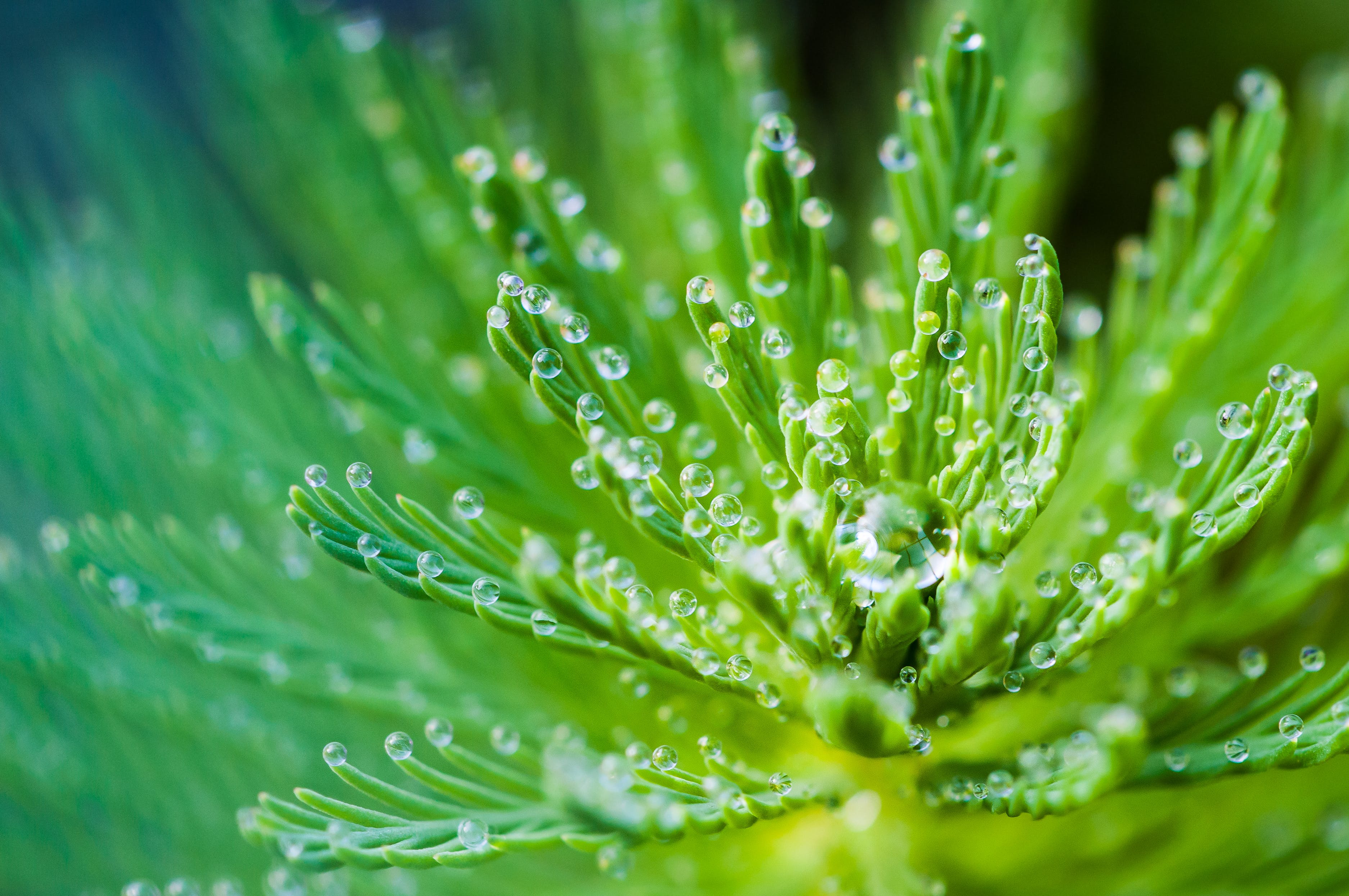 Water Droplets on Green Leaf Plant