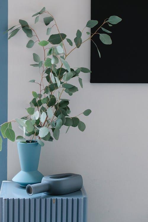 Δωρεάν στοκ φωτογραφιών με eudicots, myrtaceae, αγγειοσκλήρυνση