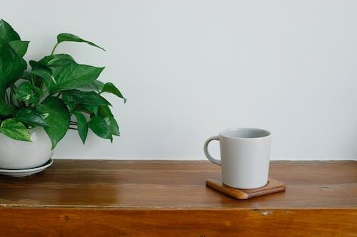 Darmowe zdjęcie z galerii z aromat, botanika, ciepły